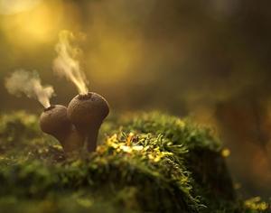 美丽的蘑菇都有毒!看看还是可以的