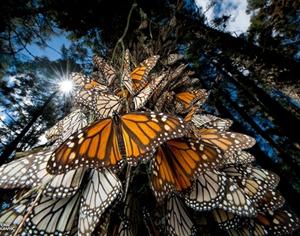 壮观的生命延续 动物大迁徙!