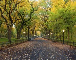 全球最美的12条林荫道