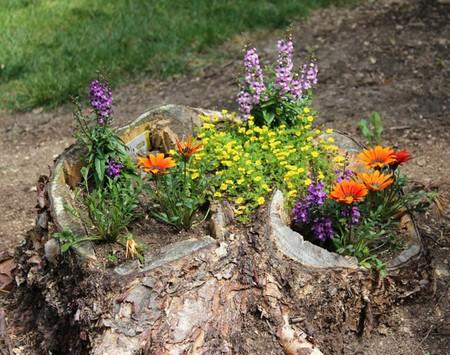 老树桩变成美丽的花园