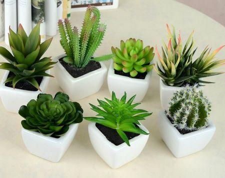 我的天呐,植物怎么可以这么可爱
