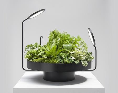 无土栽培?室内台灯?盆景?这个设计是什么?