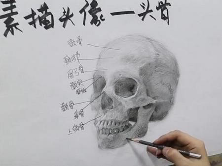 """艺考学堂——""""头骨""""素描技法"""