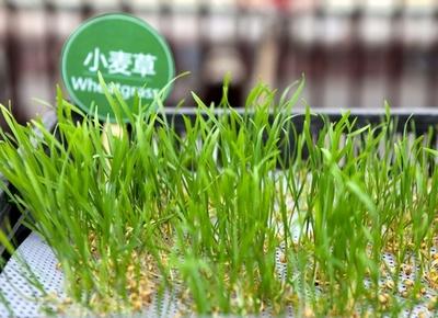 2013北京国际设计周-城市生态农场